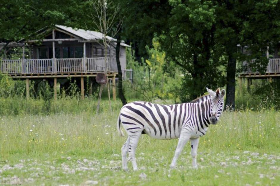 dormir dans un zoo avec des animaux sauvages. Black Bedroom Furniture Sets. Home Design Ideas