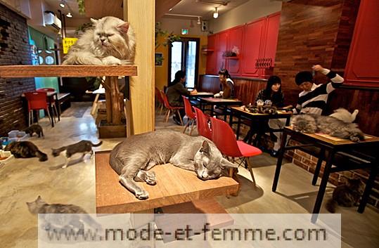 bar à chats japon